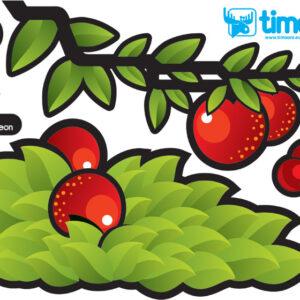 CHAMELEON TOMI - jabłka